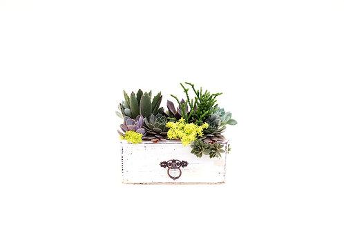 dresser drawer succulent arrangement planter easy care