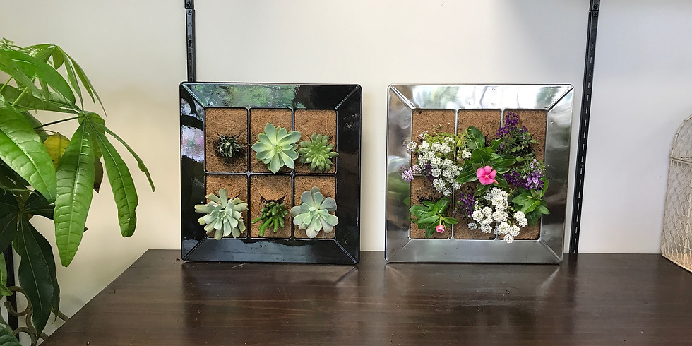 Create a Hanging Wall Planter!
