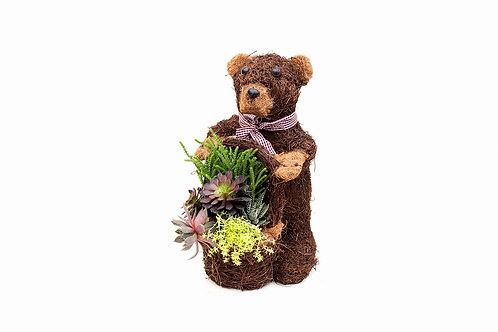 succulent arrangement brown bear planter easy care