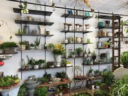chester store shelves