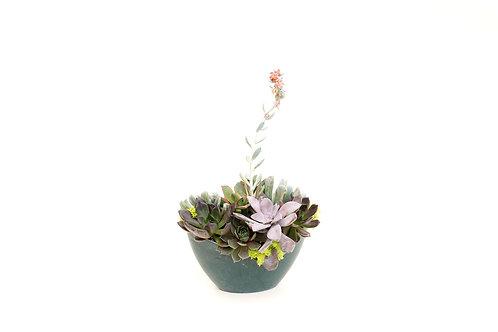 succulent small bowl pot oval arrangement planter easy care