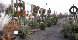 hilldborough holiday wreath display
