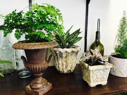 osaka white and cryptanthus- chester