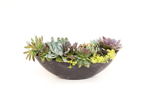 oval succulent pot bowl arrangement planter easy care