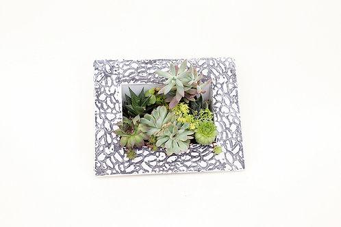 succulent planter arrangement square frame vertical easy care