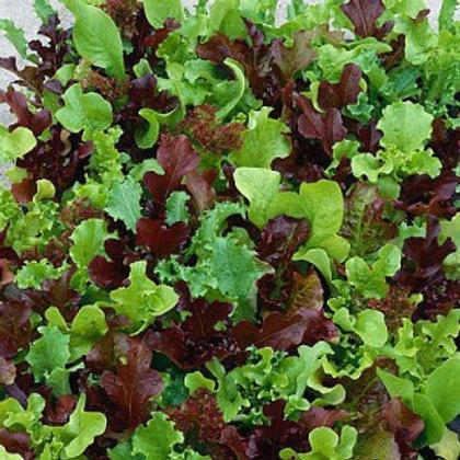 'Wildlife Mix' Lettuce