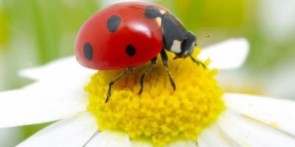 Pollinator Lecture Series: Beneficial Insects!