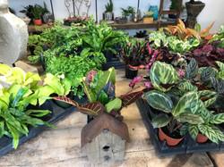 Chester houseplants 2_3018