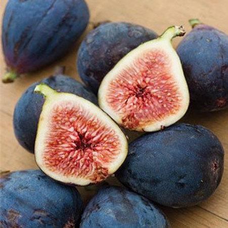 Fig Tree 'Blackjack'