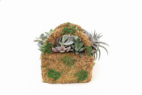 succulent arrangement planter purse moss easy care
