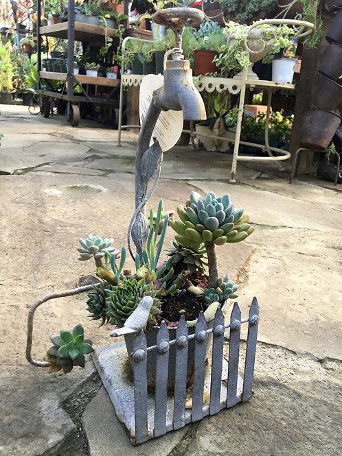 Succulent Planter Water Spigot