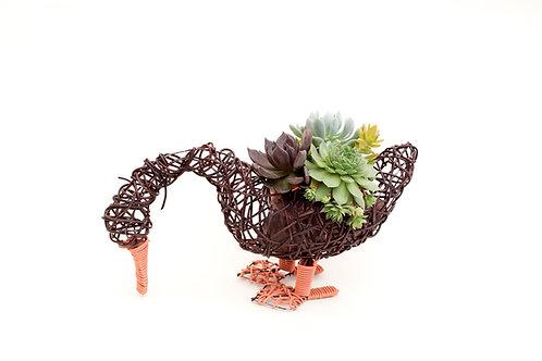 succulent planter arrangement goose easy care