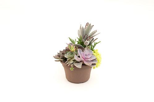 succulent planter arrangement mixed easy care