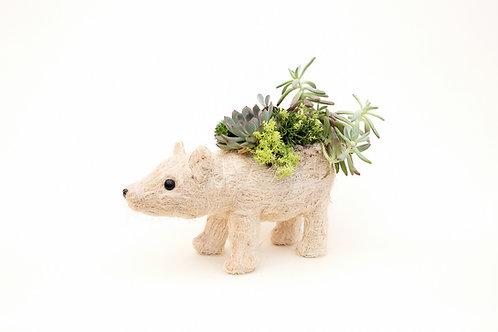succulent planter arrangement polar bear easy care