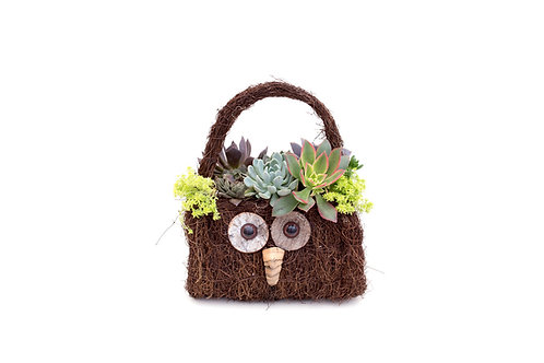 succulent owl basket handle planter arrangement easy care