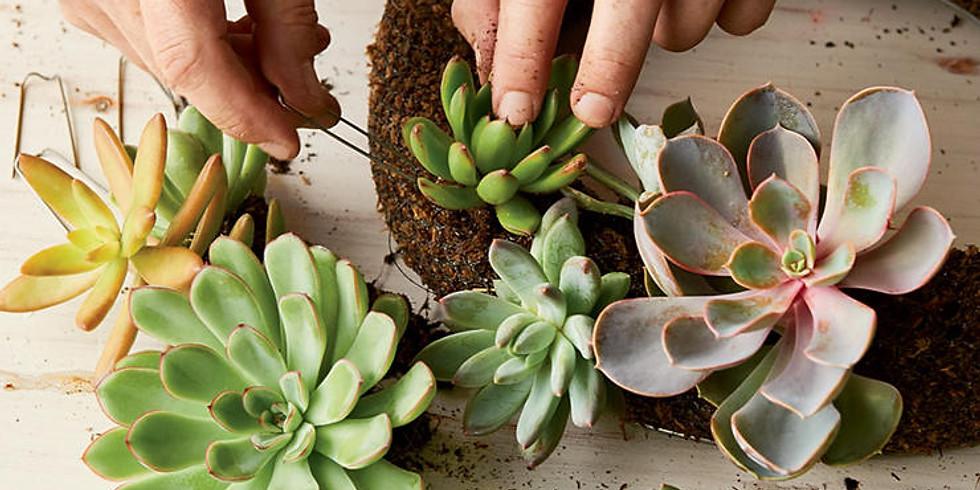 Create a Living Succulent Wreath (1)
