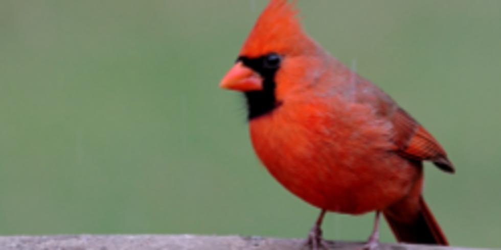 Pollinator Lecture Series: Birds!