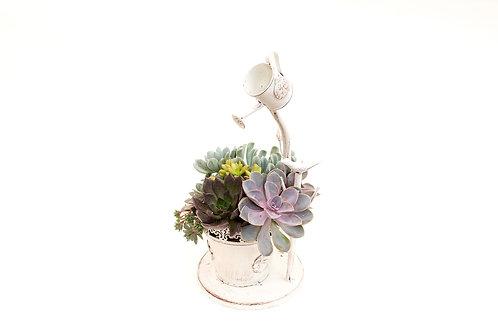 succulent arrangement planter water spigot watering can easy care white