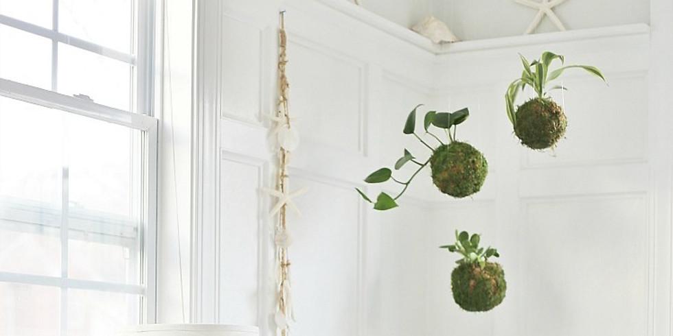 Hanging Three-Fern Kokedama and Terrarium Garden Class