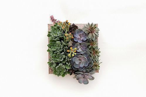 succulent arrangement planter vertical box easy care wood frame