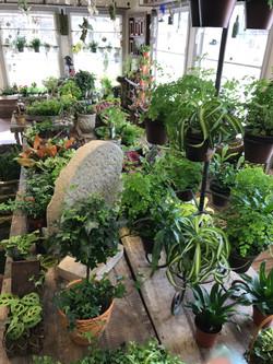 chester indoor plants 3_2018