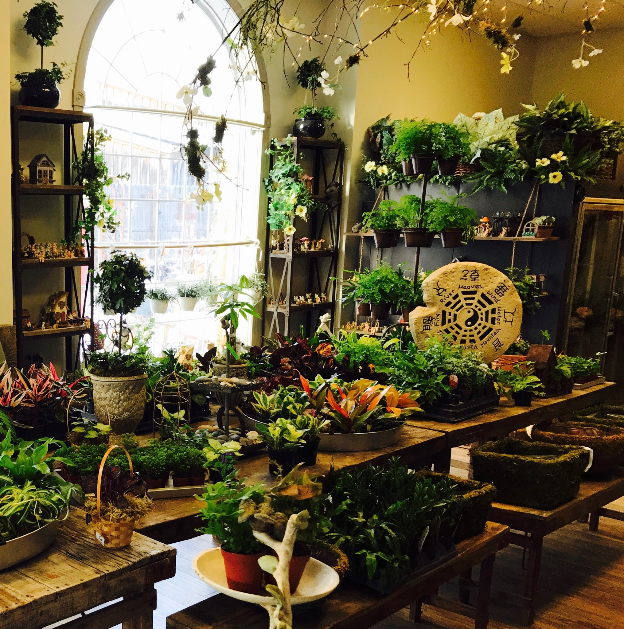 Chester plant table march 2018