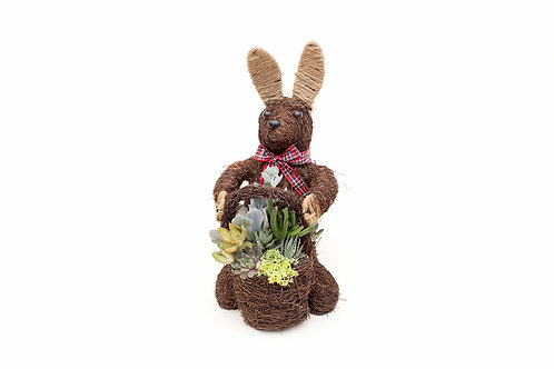 bunny rabbit succulent planter arrangement easy care