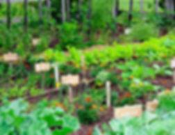 Vegetable Gaden