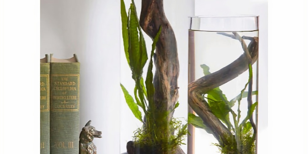 Engage an Aquatic Landscape with a Driftwood Water Garden!