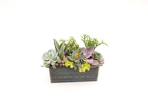 succulent planter box arrangement easy care