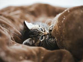 寒いときには猫