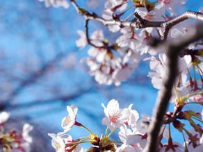 広島造幣局「花のまわりみち」