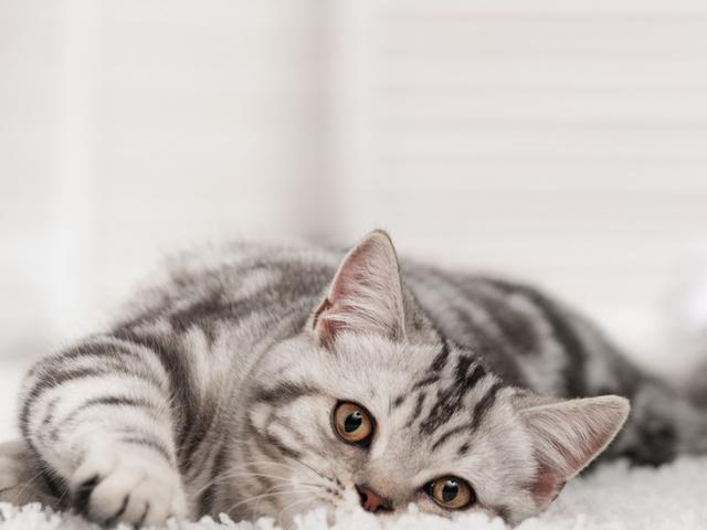 Cat on Carpet  for website.png