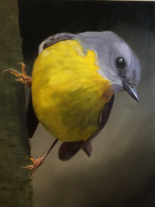 """Yellow Robin with Attitude"" Oil on linen 24 x 30"