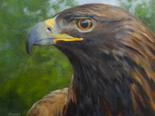 """Spirit the Blind Eagle"" Oil on Linen 16""x 20"""