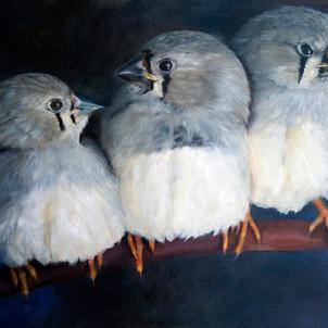 Birds as Art