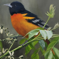 """Oriole in Migration 16x20"""" SOLD"""