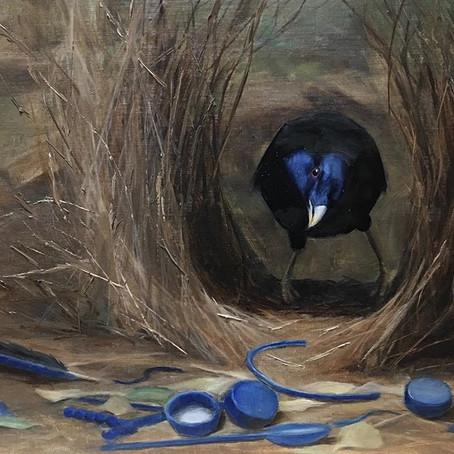 The Curious life of a bowerbird