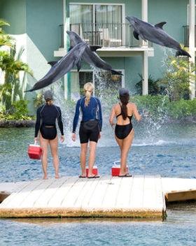 Kahala Dolphin Quest.jpg