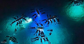 Manta Rays Big Island.jpg