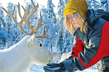 Reindeer Safari 2.jpg