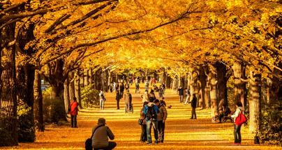 Meiji Shrine Garden Autumn
