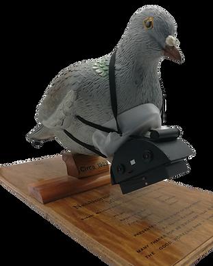 pigeon photographer