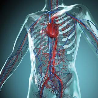 maladies-cardiovasculaires-m.jpg