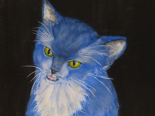 Kitten Feels Blue