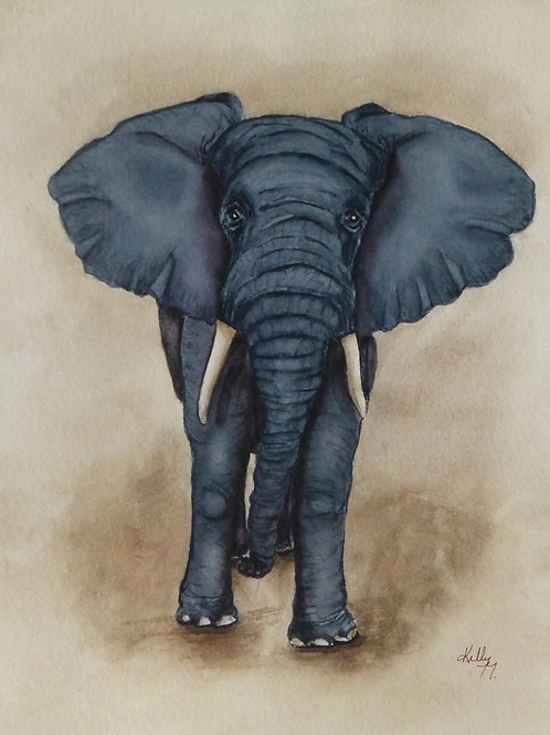 Payne's Grey African Elephant