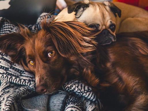 3 passos para eliminar odores de animais de sua casa