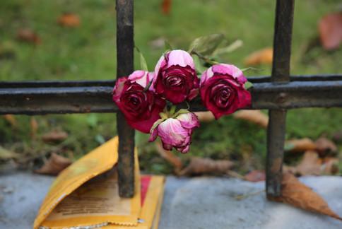 A rose In Lviv