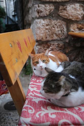 Nigel and Marmalade Cats Of Stari Grad
