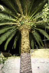 Stair Grad Huge Palm